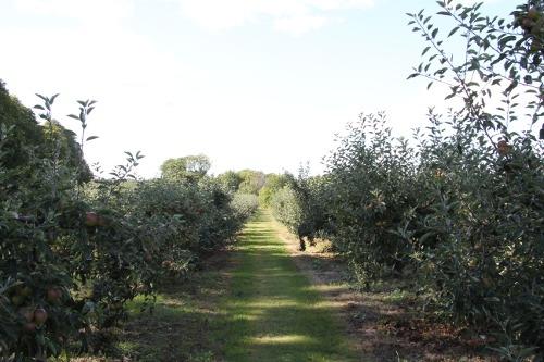 Kivik-Apfelplantagen