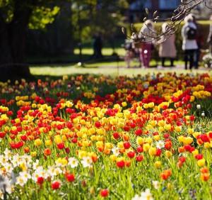 Botanischer Garten in Lund. Bildquelle botaniskatradgarden.se