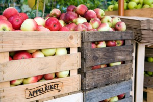 Miriam Preis/imagebank.sweden.se Äpfel aus Kivik