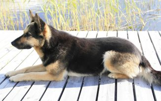 Schweden-Urlaub mit Hund Bild: Silke Nordfjäll